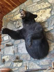 bear on wall